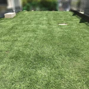 外構 安くする方法 天然芝