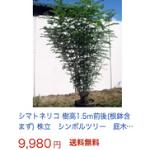 ネット 購入 シンボルツリー
