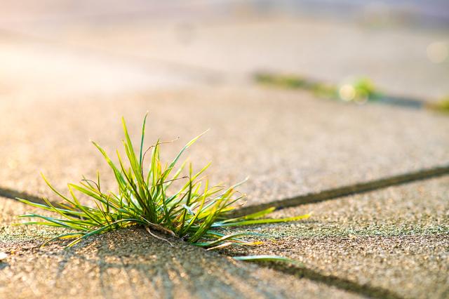 最低限の外構 雑草対策